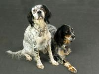 portrait photo de chiens